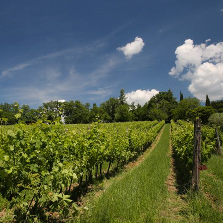 PASSION FOR VERDICCHIO