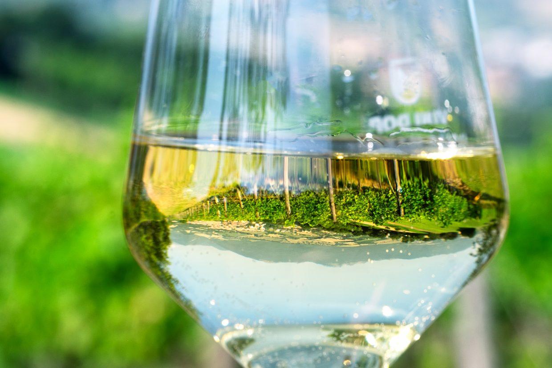 Le Marche del vino: Verdicchio di Jesi e di Matelica