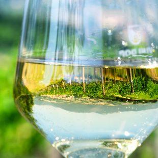 (Italiano) Le Marche del vino: Verdicchio di Jesi e di Matelica